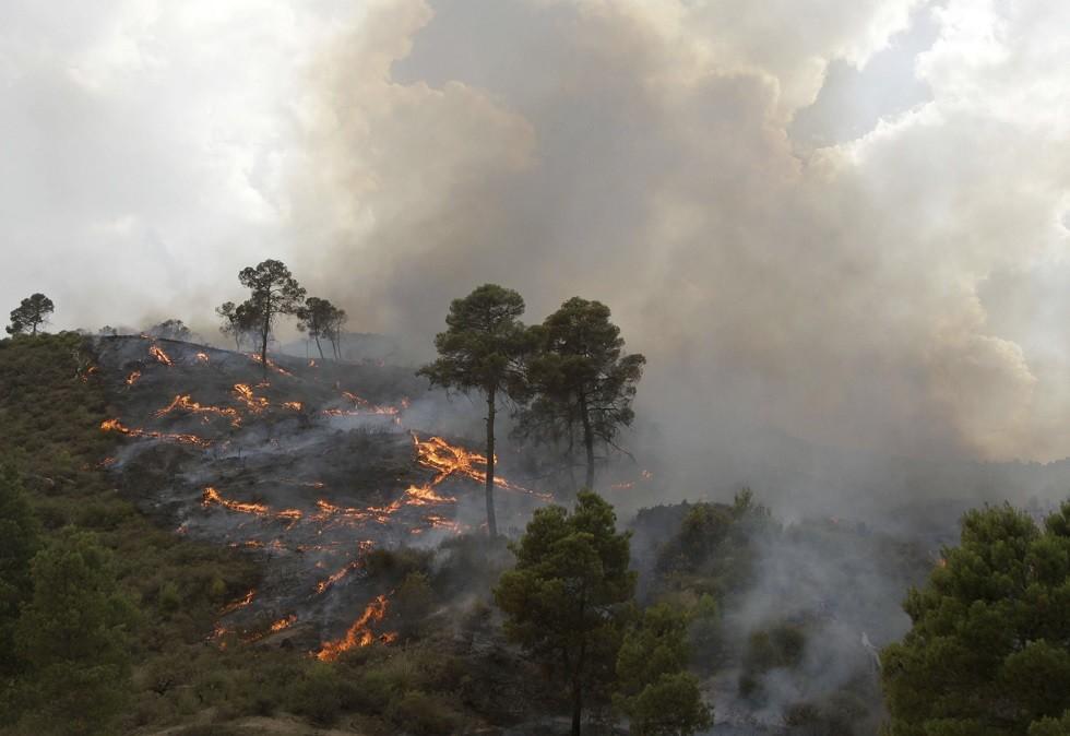 الجزائر.. حرائق ضخمة تلتهم آلاف الأشجار المثمرة ومساحات واسعة من الأحراش (فيديو)