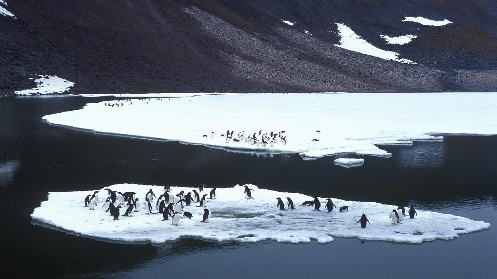خبيرة  روسية: الأيام الدافئة في القطب الجنوبي تتضاعف والأمطار تنهمر