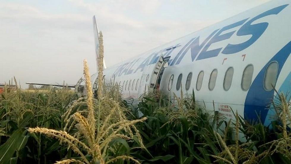 هل أنقذت سيقان الذرة طائرة الركاب الروسية من كارثة مؤكدة؟