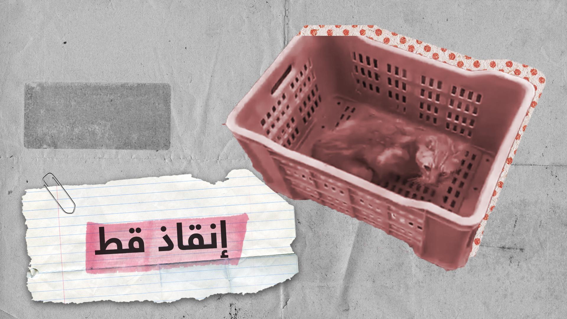الدفاع المدني التونسي ينقذ قطا علق في بئر منذ عام ونصف