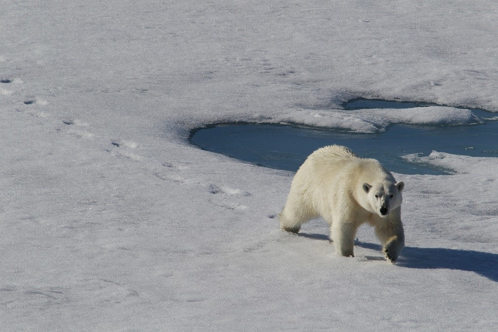 تسجيل رقم قياسي في درجة الحرارة بالقطب الشمالي