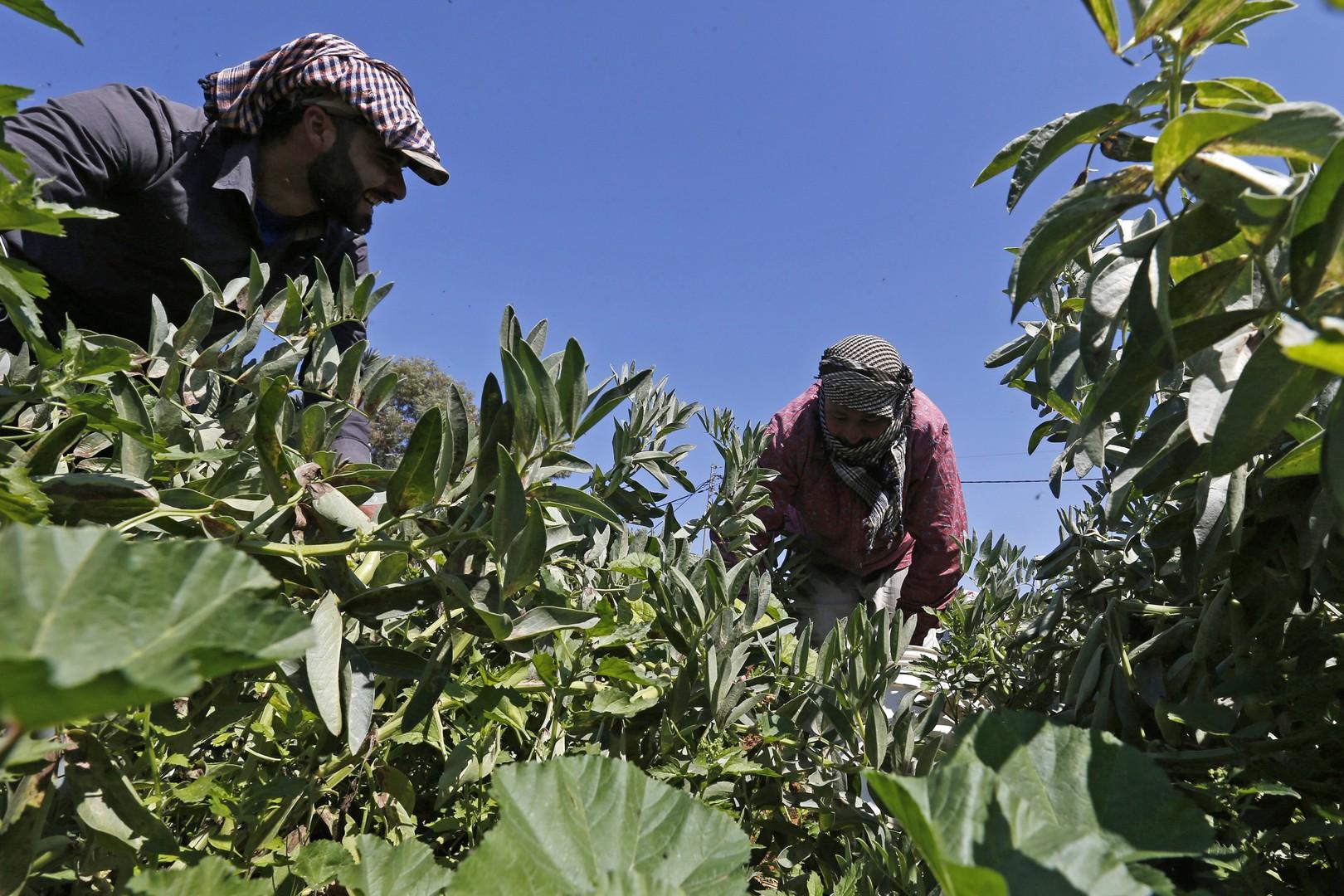 تركيا تتصدر بلدان العالم بأربع منتجات زراعية