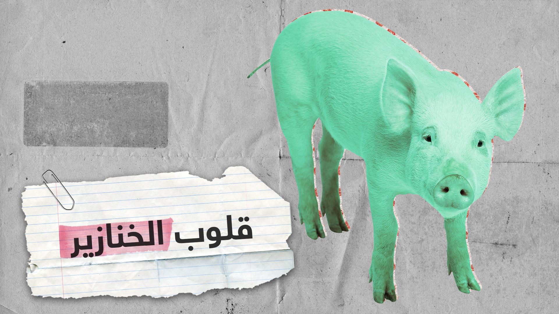 """نقل قلوب الخنازير للبشر.. جراح بريطاني يعلن عن تطور """"ثوري"""""""