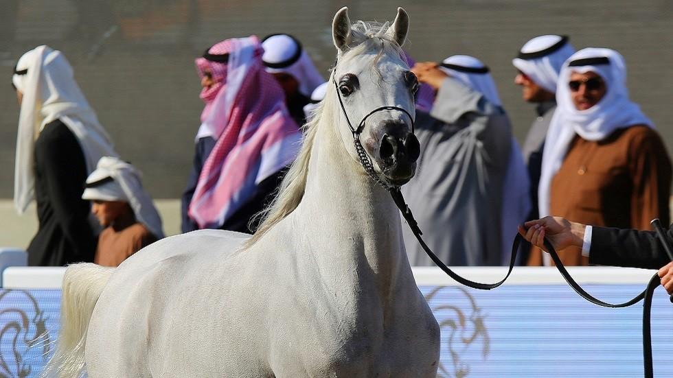 علاج جديد للخيول