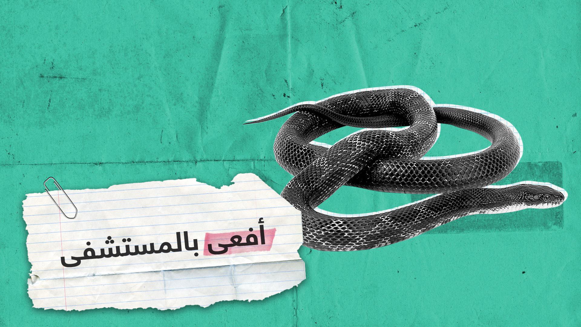 فيديوهات متداولة.. أفعى وكلاب داخل مستشفيات عراقية!