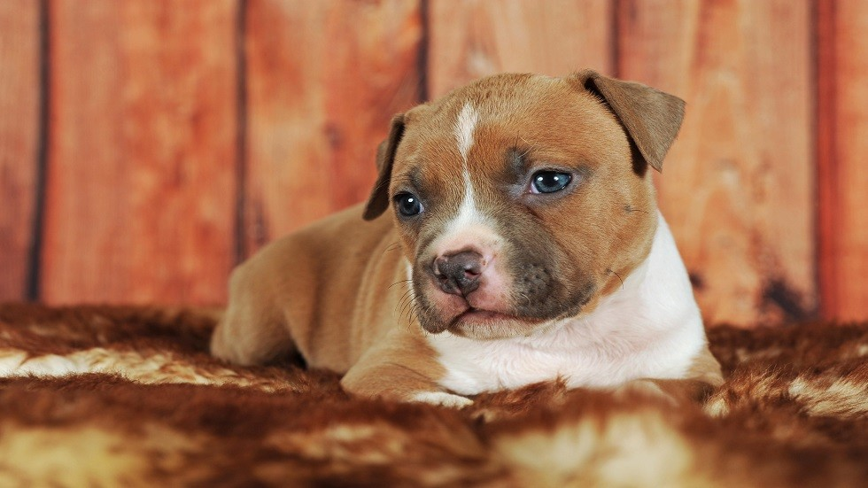 حاسة الشم في الكلاب تساعد على كشف السرطان