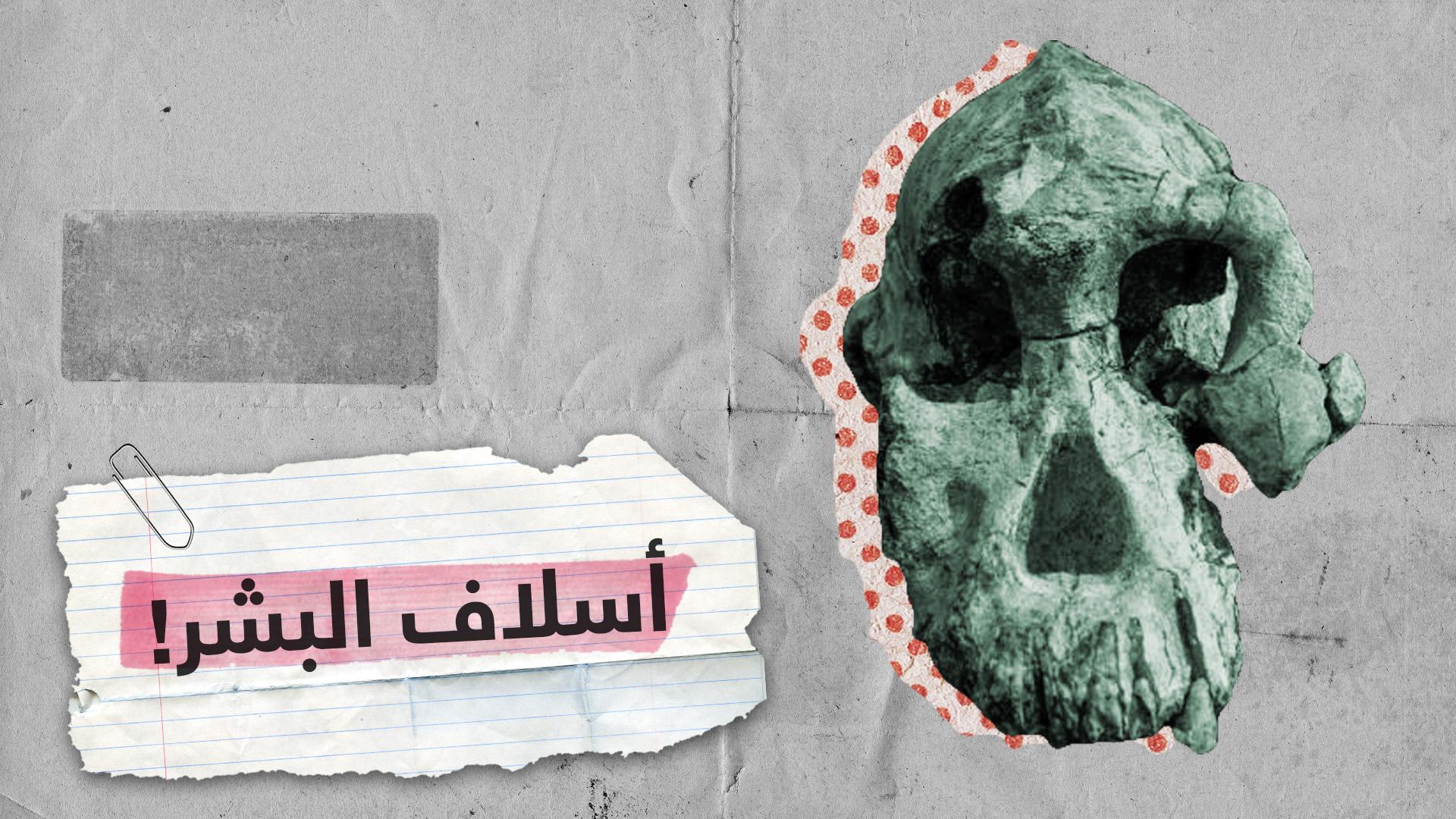جمجمة عمرها يقارب 4 ملايين سنة قد تعود لسلف الجنس البشري!
