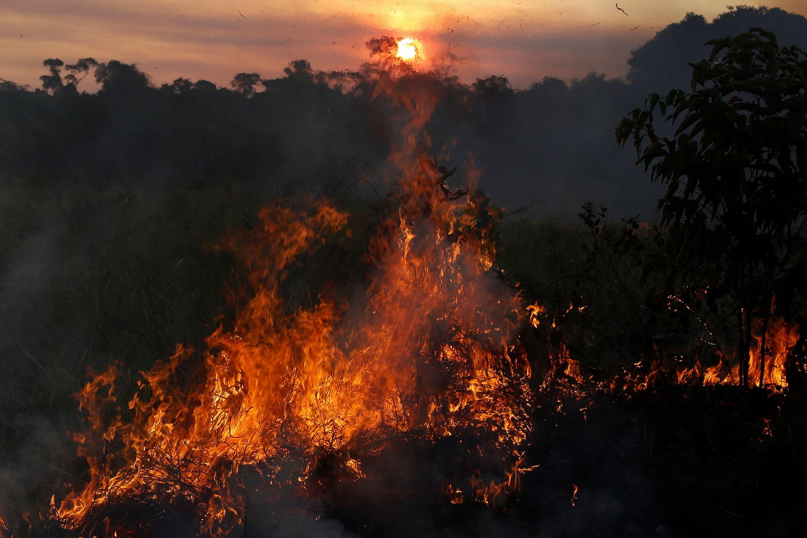 الأمازون.. رئة للأرض أم مجرد منجم للأخشاب؟