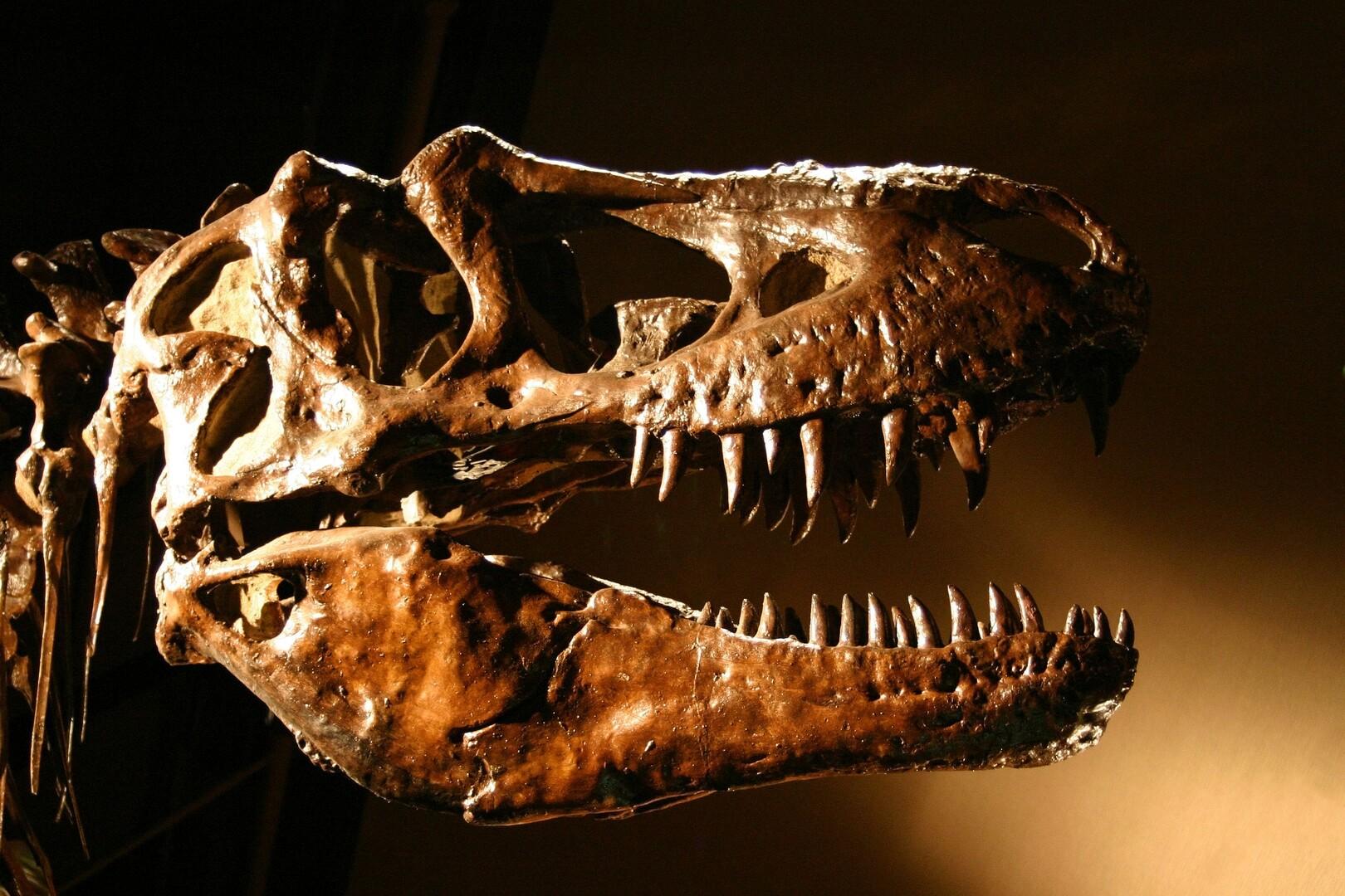 علماء يحلون لغزا لدى حيوان مفترس حيرهم لسنوات!
