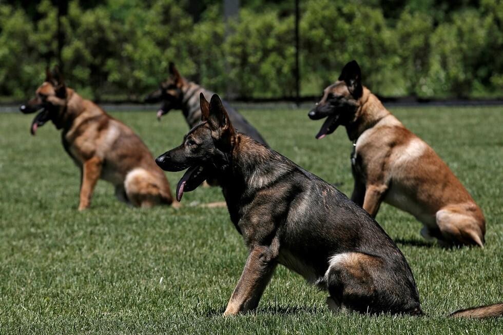 لسبب أرهقها.. مدينة إسبانية تفرض ضريبة على تربية الكلاب