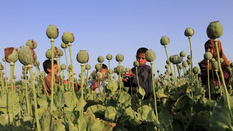 إيران: إنتاج المخدرات في أفغانستان تضاعف 50 مرة بعد دخول القوات الأجنبية