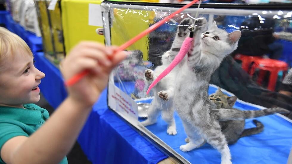 علماء: القطط أكثر ارتباطا بالبشر