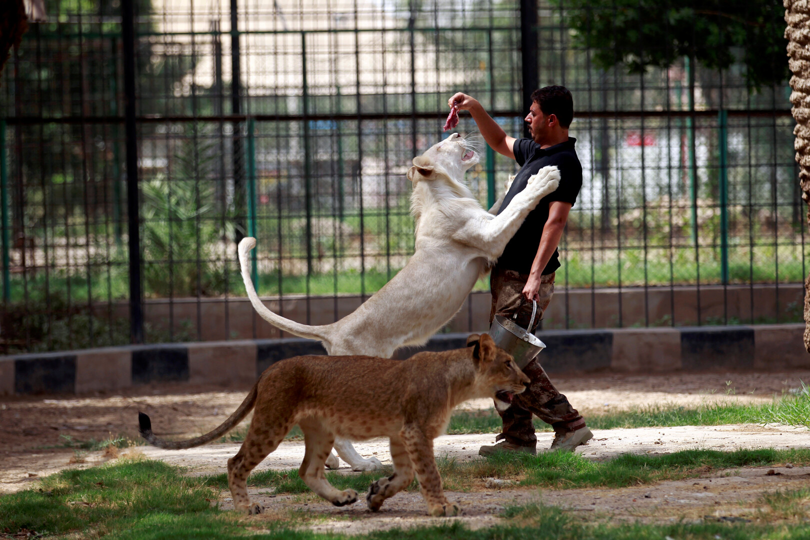 حديقة الحيوان في بغداد