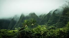 كم بقي من الغابات المطيرة في العالم؟