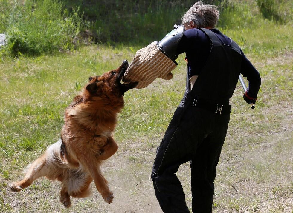 كيف تتصرف في حال هاجمك كلب شرس؟