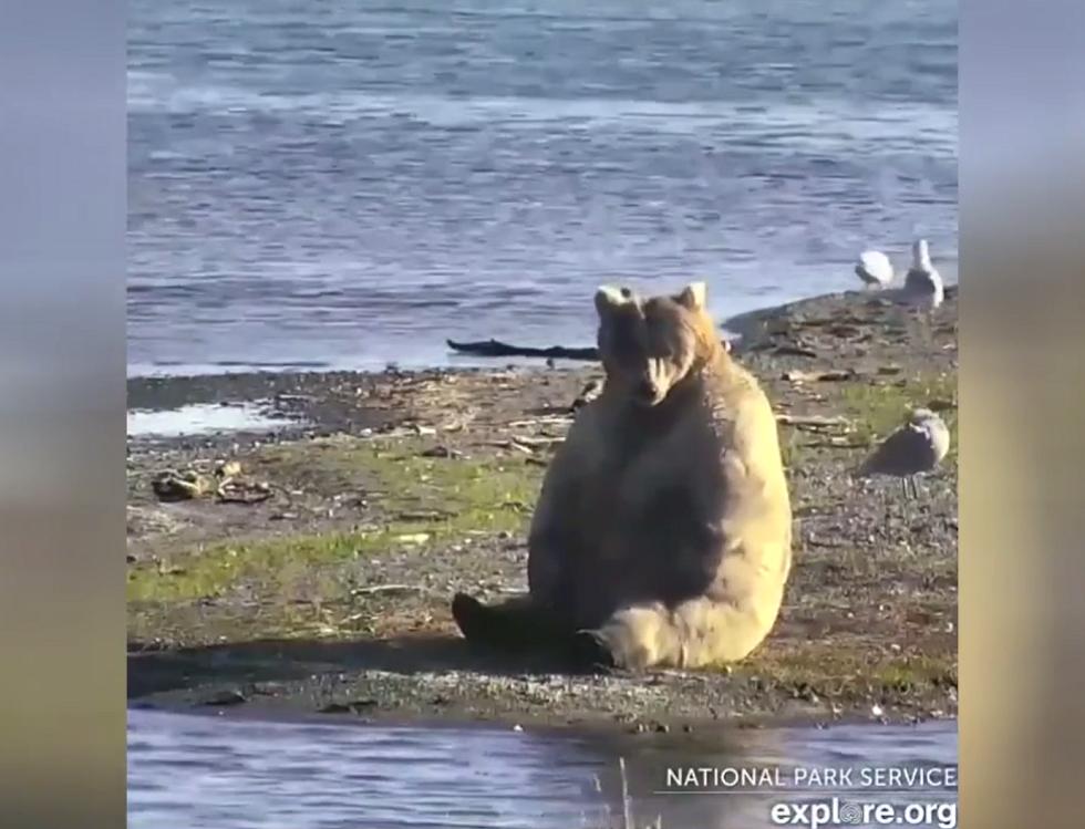 هل استيقظ الدب لتوه من القيلولة؟