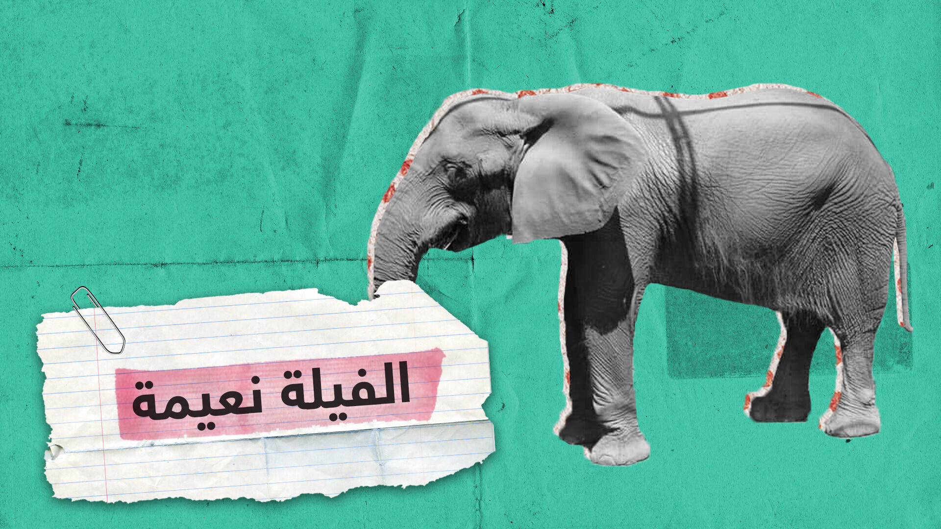 بعد محاولات لإنقاذها.. نفوق آخر فيلة حديقة الجيزة المصرية