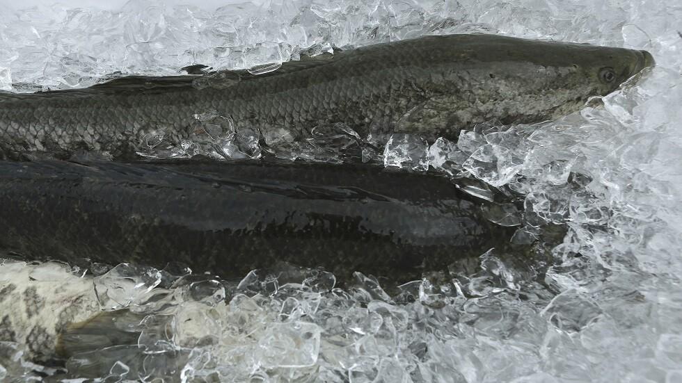 سمكة الـ