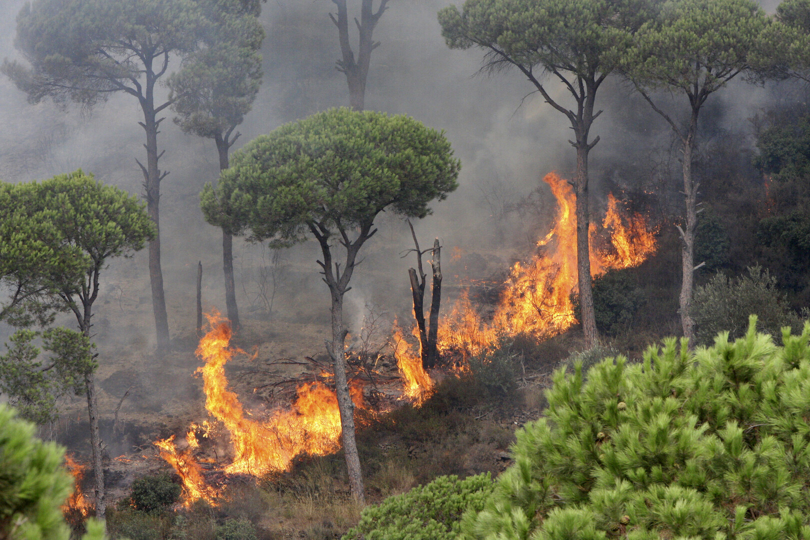 الحرائق تجتاح لبنان (فيديو)