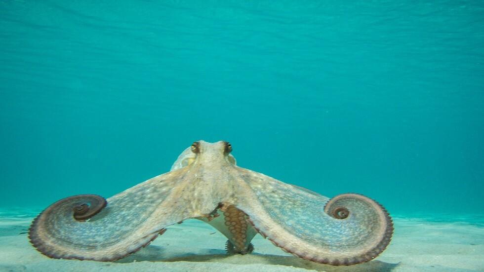 فيديو يصور كائنات بحرية تتغذى على حوت نافق في أعماق البحار