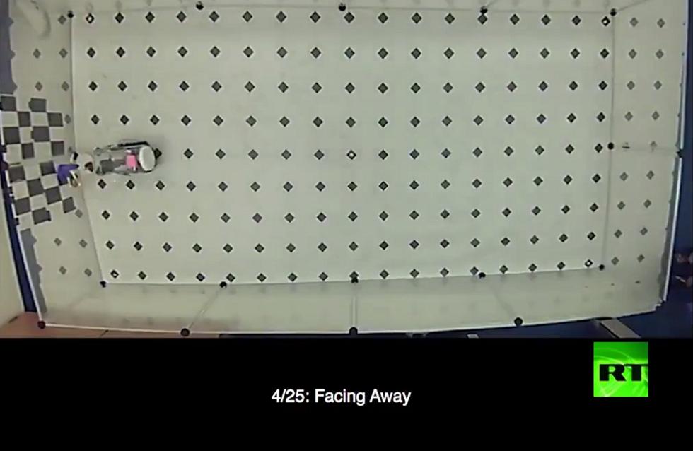 بالفيديو.. فئران تتعلم القيادة
