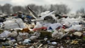 روسيا ستحظر استخدام الأكياس البلاستيكية حفاظا على البيئة