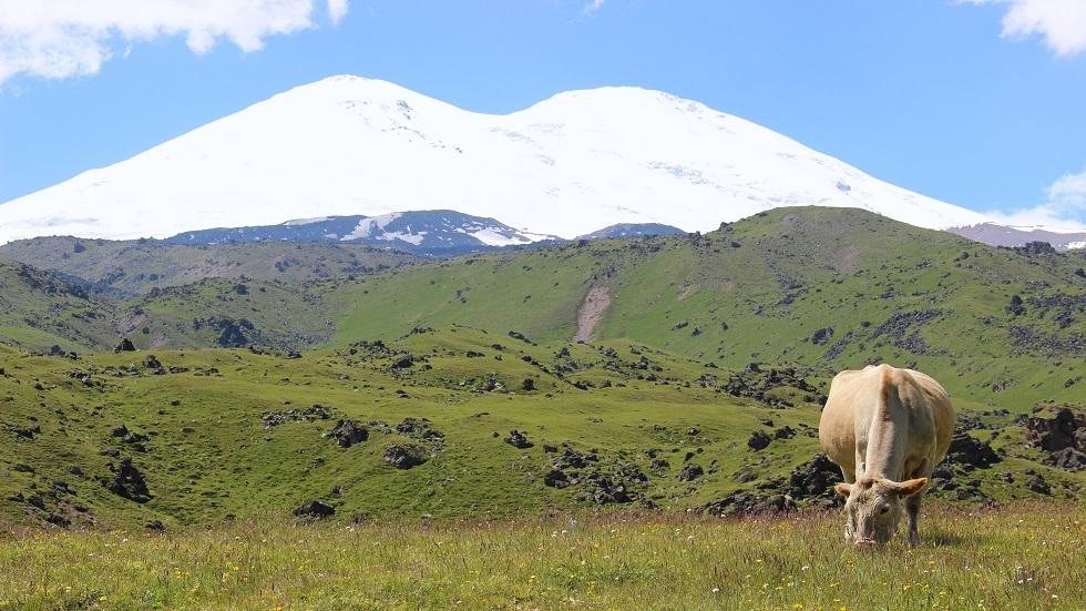 جبل ألبروز