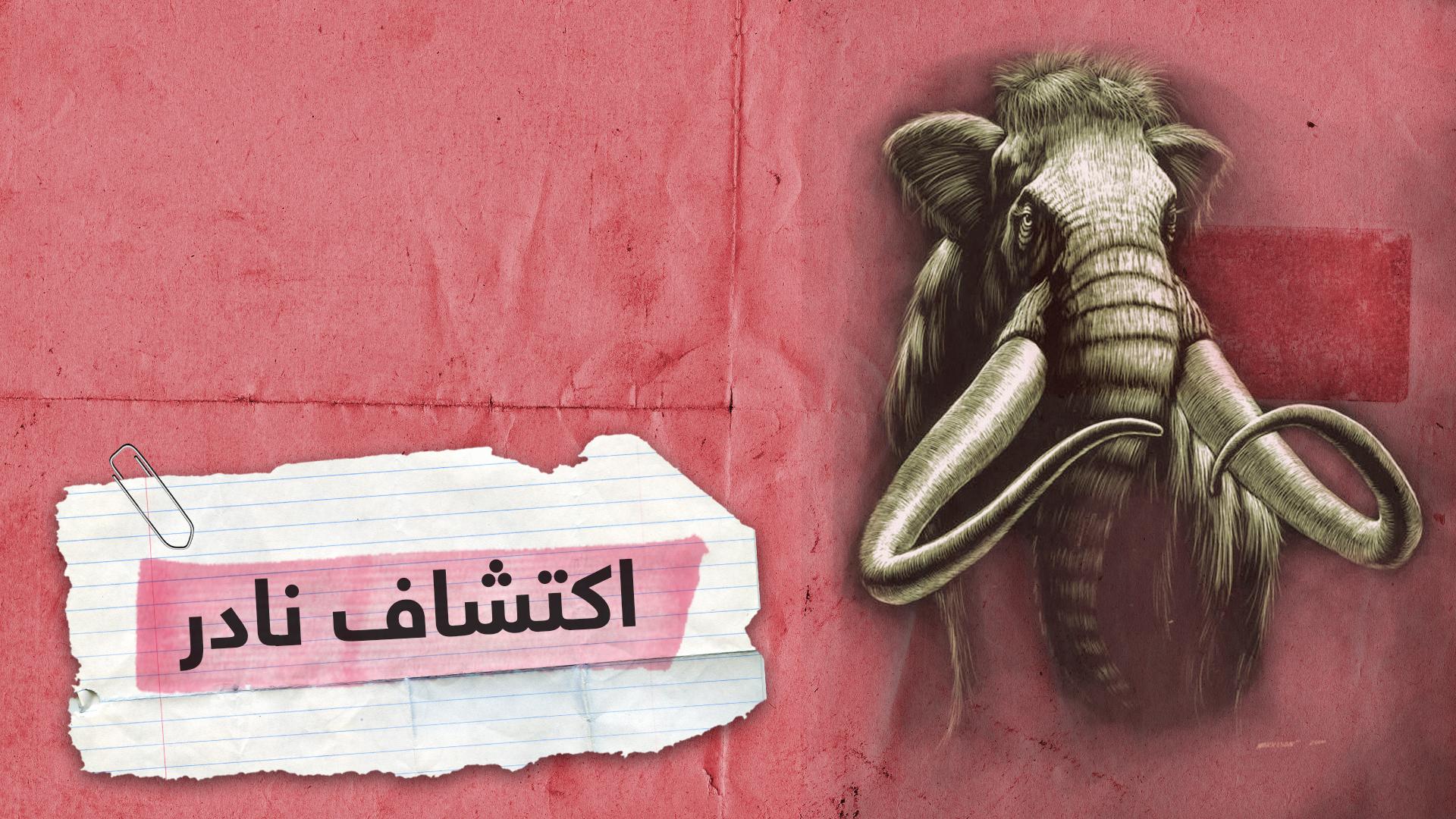 أكبر اكتشاف لفيل الماموث المنقرض منذ آلاف السنين