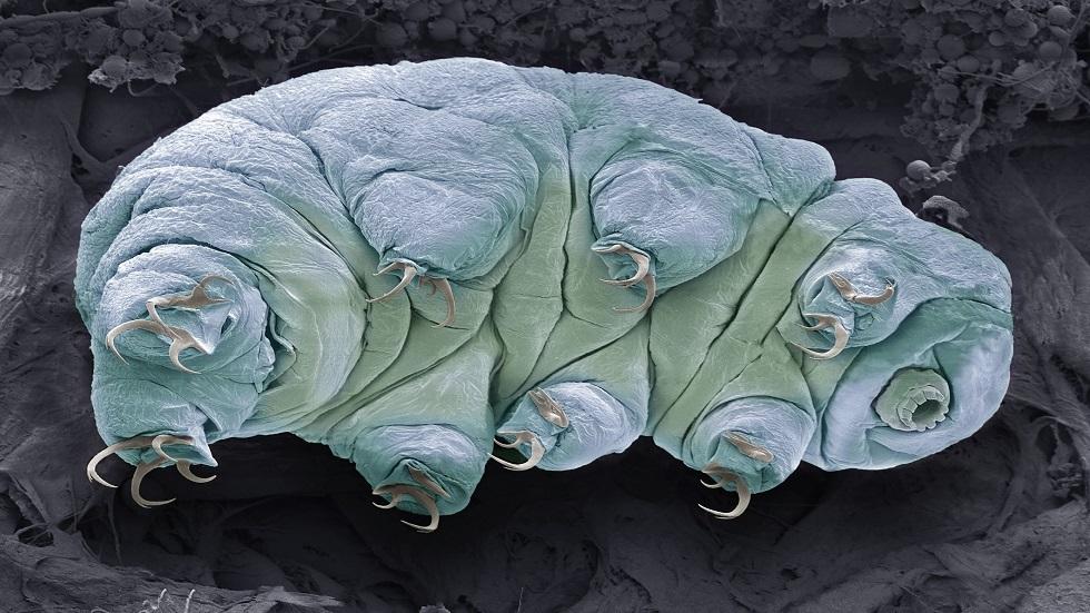 خطة مثيرة لدمج بروتين حيوان مجهري مع خلايا رواد المريخ لحمايتهم من الإشعاع القاتل