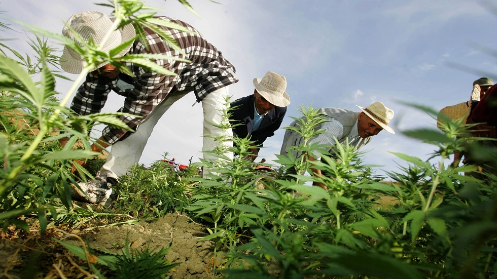 المغرب يسجل تقلص مساحات زراعة