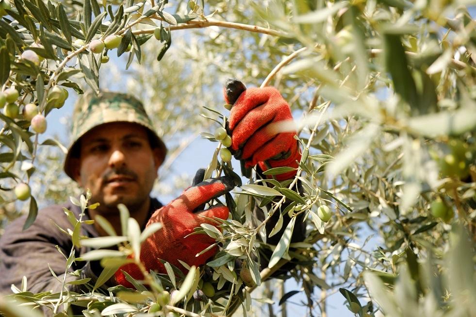 مزارعون إسرائيليون: إعادة أراضي الباقورة للأردن بمثابة