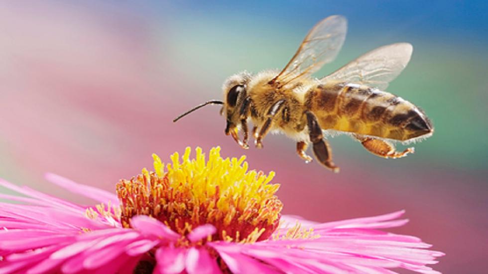 الحشرات تلقح النباتات