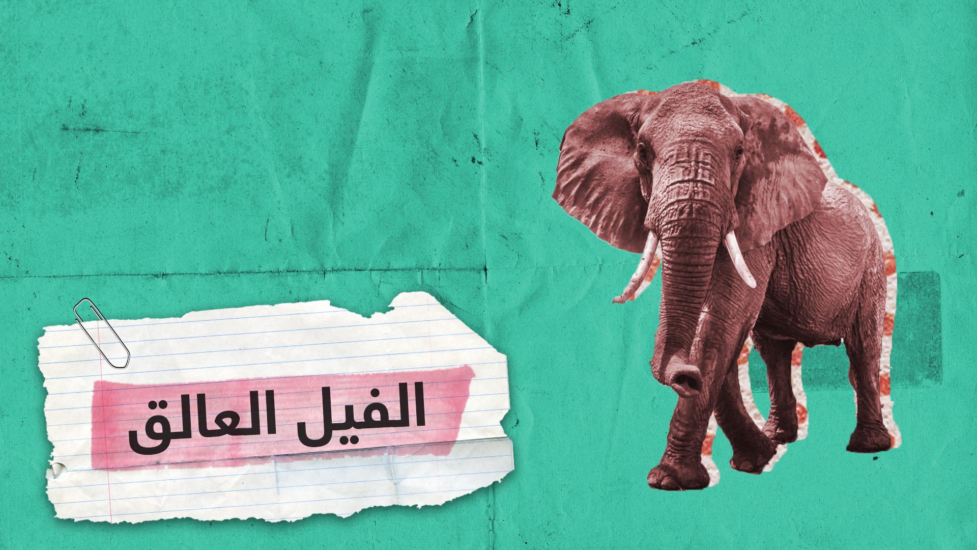 فيل عالق لـ12 ساعة في بركة بعمق 4 أمتار بعد محاولته الشرب منها