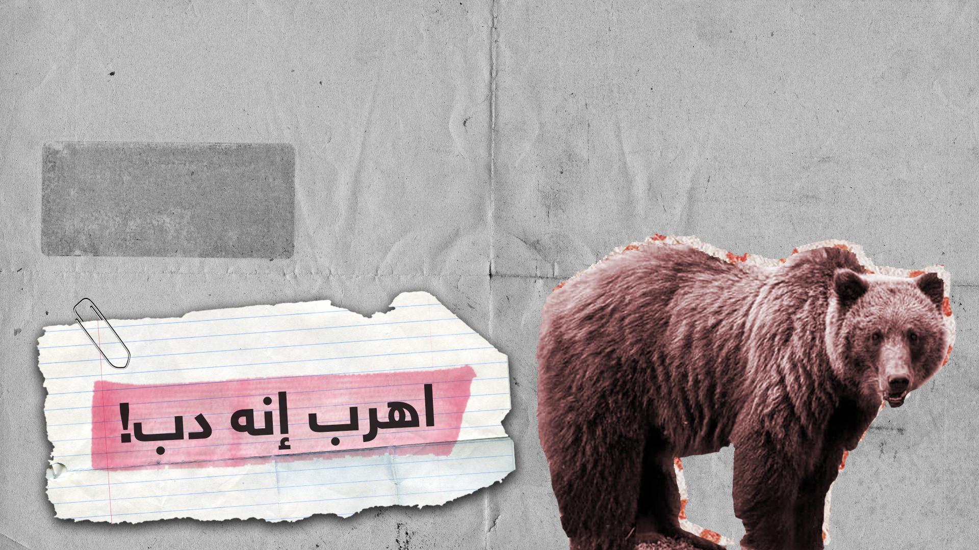 داخل  وكر الدب