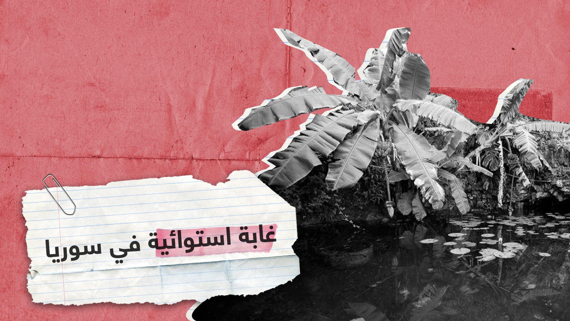 مشروع بيئي فريد.. أشجار الأفوكادو والبابايا تزرع في سوريا!