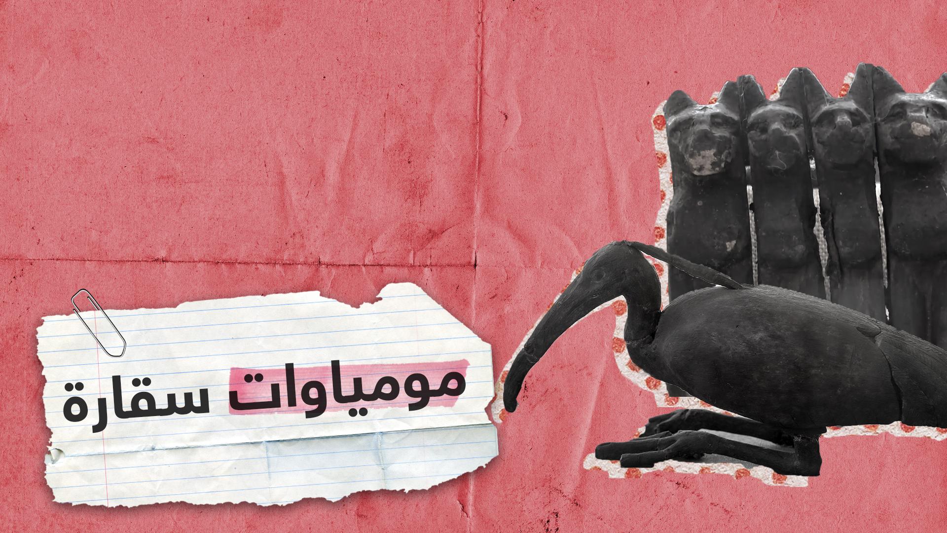 مومياوات لأشبال أسود.. ماذا حوى الكشف الأثري بجوار هرم سقارة في مصر؟