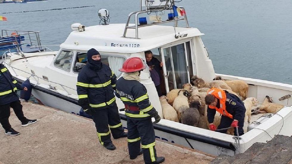 15 ألف رأس غنم بطريقها للسعودية مهددة بالغرق في البحر الأسود