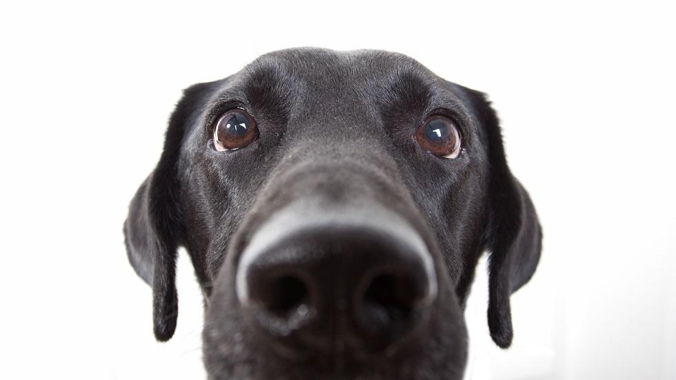 رجل يفقد حياته بطريقة مروعة بسبب لعق كلب لوجهه