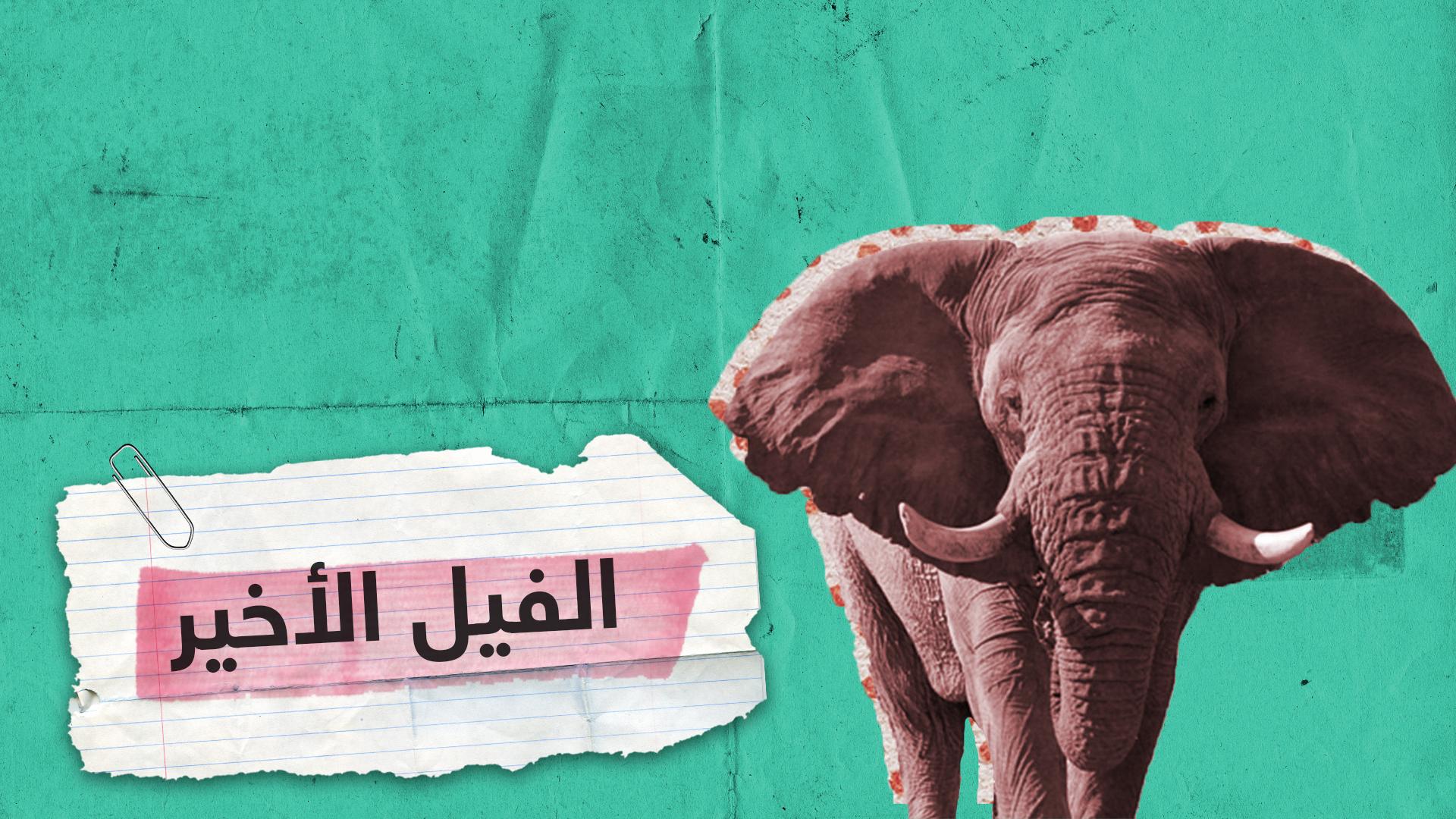 آخر فيل حي في جنوب إفريقيا!