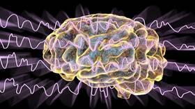فيديو علمي يكشف ما يطهر الدماغ من السموم أثناء النوم!
