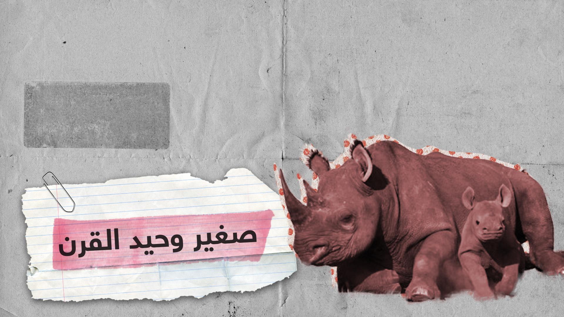 على وشك الانقراض.. ولادة وحيد قرن أبيض في بلجيكا
