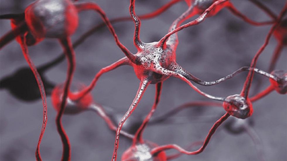 حل لغز ولادة الوعي في الدماغ