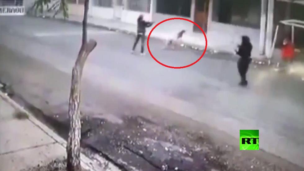 كلبان يحميان امرأة من سطو مسلح