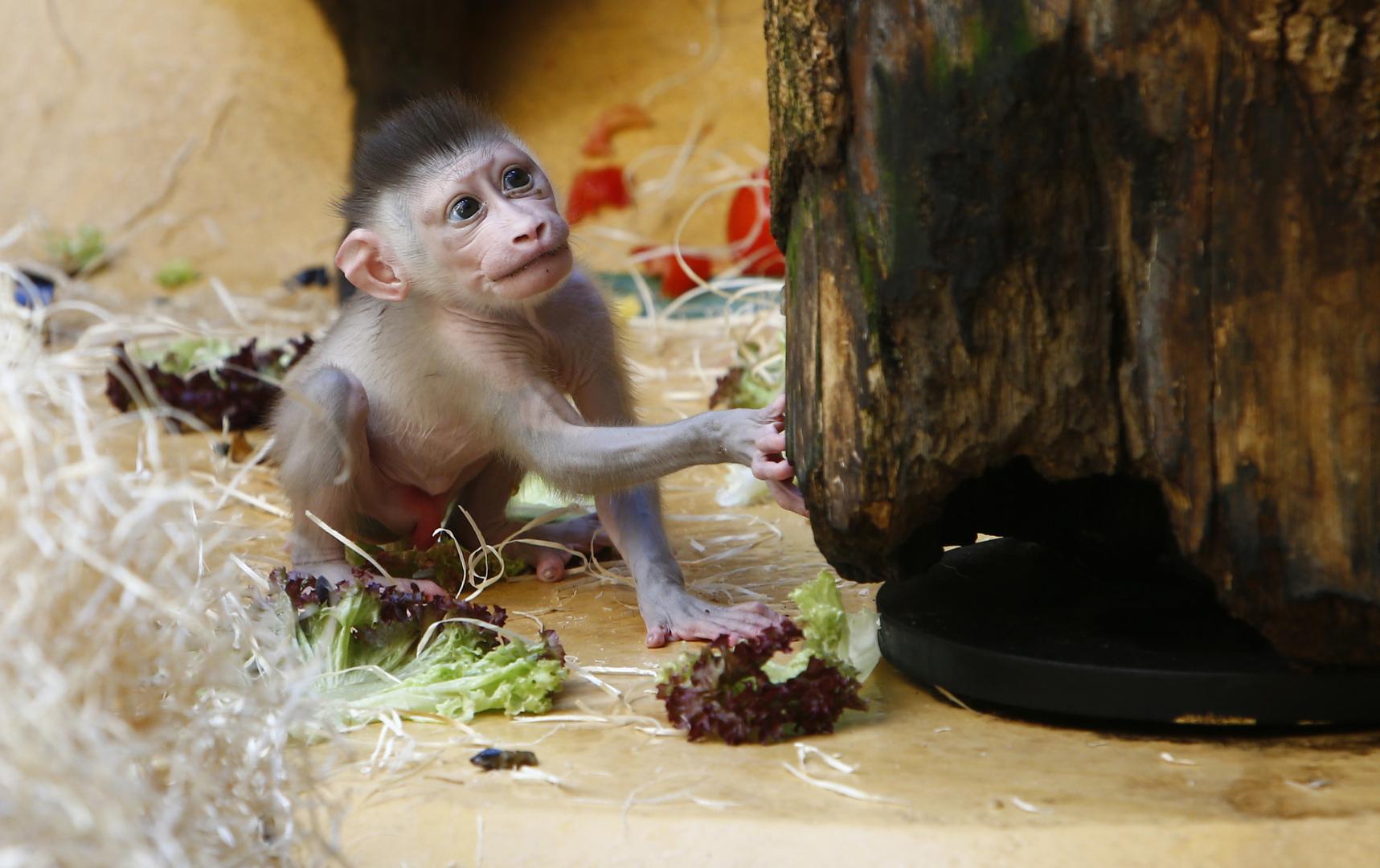 مأساة في حديقة حيوانات بألمانيا ليلة رأس السنة!