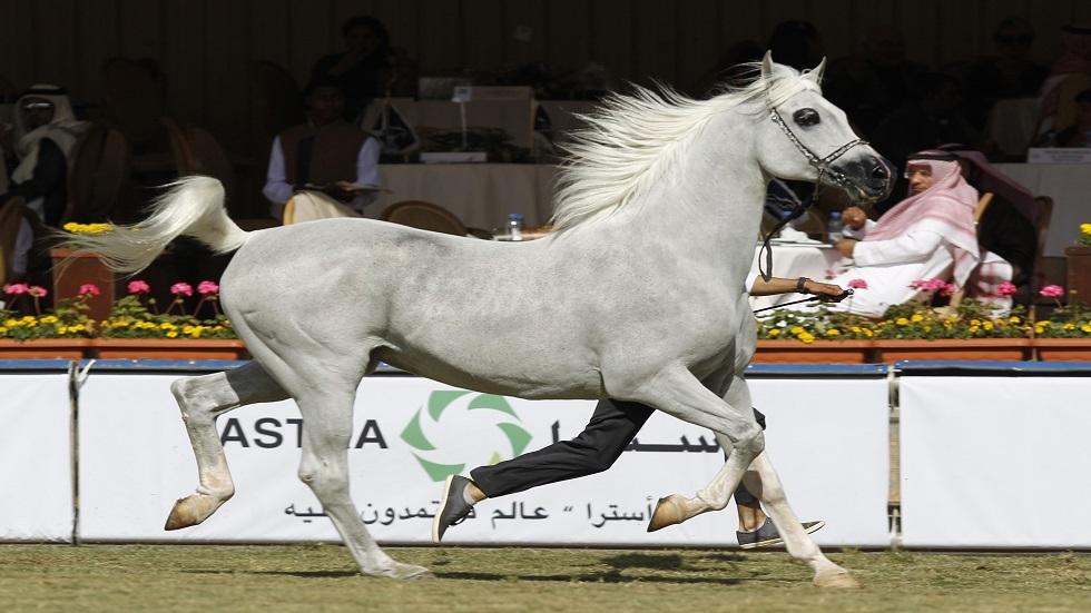 حصان عربي - أرشيف