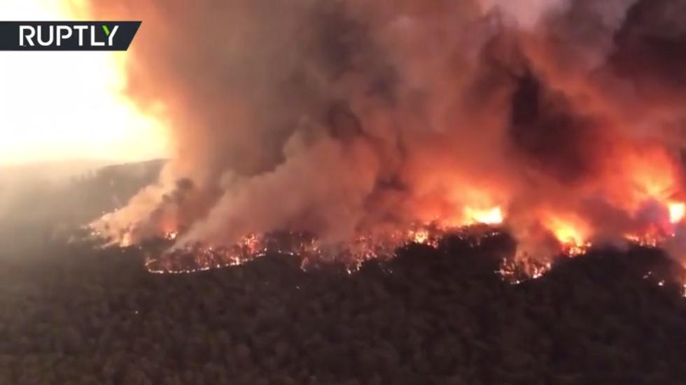 أستراليا.. نفوق نصف مليار حيوان حرقا في الغابات