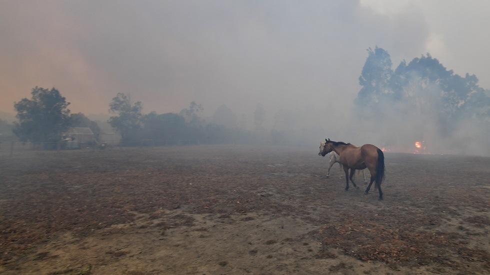 هاميلتون يتبرع بنصف مليون دولار لإخماد حرائق أستراليا ومع ذلك يتعرض للانتقادات (فيديو)