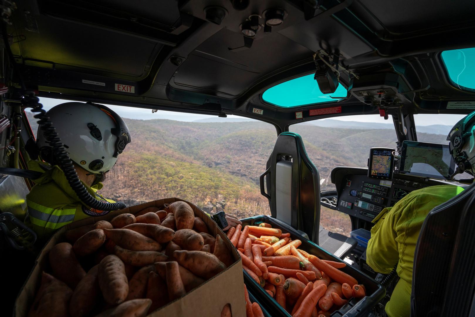 أستراليا تنقذ حيواناتها بالجزر والبطاطا (صور + فيديو)