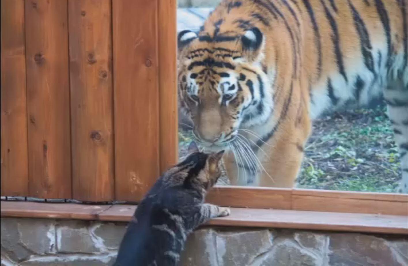 نمرة وقطة.. لا شيء يقف بوجه الصداقة!