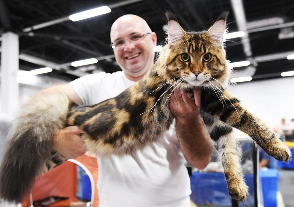 العثور على قط عملاق في الولايات المتحدة (صور)
